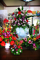 Beautiful Flower Arrangements for any Occassion